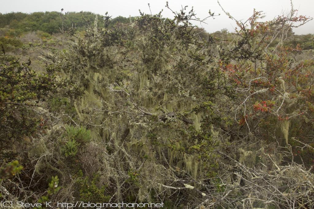 Elfin Forest Preserve