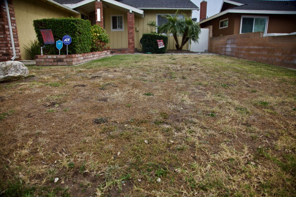 The journey to restore our front yard begins.